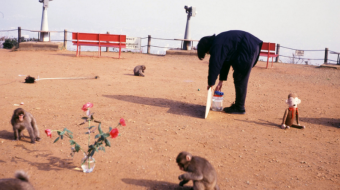 Shimabuku, Gift: Exhibition for the Monkeys, 1992 Iwatayama, Kyoto. Courtesy de l'artiste et Air de Paris, Paris